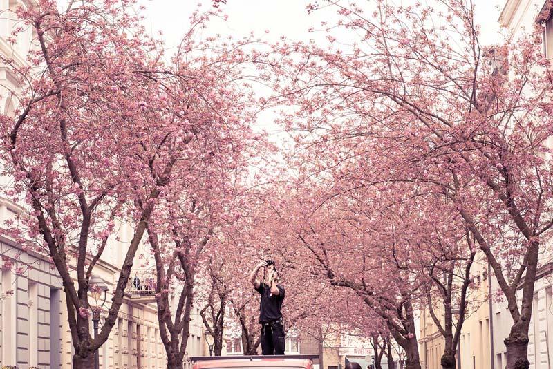 Cerejeiras - Heerstrasse